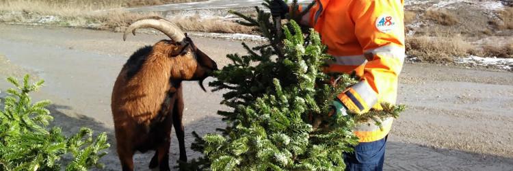 Spaljivanjem drvaca proizvodi se električna i toplinska energija